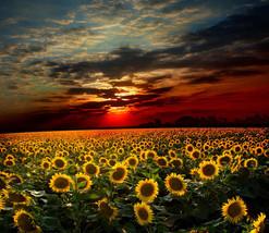3D Sonnenblumen 5402 Fototapeten Wandbild Fototapete BildTapete Familie DE - $52.21+