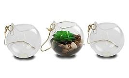 NeutralPure Hanging Glass Plant Terrarium - $12.99