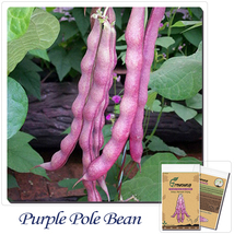 """ShopeID Store"" 20 Long Pole Bean Seeds, Purple colors, Heirloom Vegetable - $2.99"