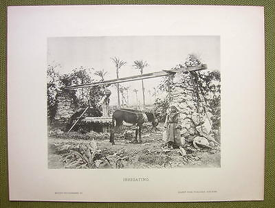 AFRICA Field Irrigation in Sudan Donkey Local Boy - 1880s Photogravure Print
