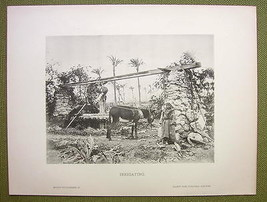 AFRICA Field Irrigation in Sudan Donkey Local Boy - 1880s Photogravure P... - $16.20