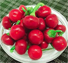 Pepper Seed 20 Seeds Ornamental Ruby Red Pepper Capsicum Vegetables Seeds B010 - $13.58