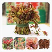 100 Pcs Toona Sinensis Bonsai Chinese Organic Toon Shoots Tree Vegetable... - $1.25