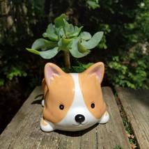 "Corgi Dog Planter with Ripple Jade Succulent, ceramic 5"" Puppy image 8"