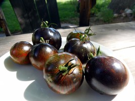 Midnight Tiger - striking and boldly-flavored new variety from J&L Gardens - $5.00