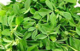 2 Variety Fenugreek Seeds Fresh #IMA30 - $15.99+