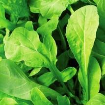 Outdoor Living – Garden - Arugula - 2,000 Seeds - Herbs Vegetable seeds - SBF - $21.95