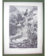 GALAPAGOS ISLANDS Birds, Reptiles and Vegetation - 1858 Antique Print En... - $12.96