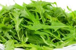 Mustard Mizuna Non GMO Heirloom Japanese / Asian Vegetable Seeds Sow No GMO USA - $2.96+