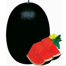 BEST PRICE 20 Seed BELLFRAM Giant Black Watermelon,DIY Watermelon Seeds ... - $4.69