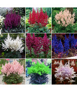 Mixed 9 Colors Astilbe Chinensis Seeds 100PCS Bonsai Colorful Garden Flo... - $8.49