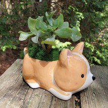 "Corgi Dog Planter with Ripple Jade Succulent, ceramic 5"" Puppy image 2"