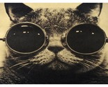 Vintage Handsome Cat Poster Wall Decal