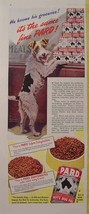 1944 MORGAN DENNIS PARD DOG FOOD WIRE FOX TERRIER PRINT AD - $9.99