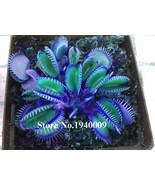 HOT Sale100Seeds Potted blue Insectivorous Plant Seeds Dionaea Muscipula... - $3.99