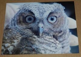 OWL CLOSEUP  PHOTO 8X10 - $3.00
