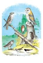 American Lanier Falcon (Prairie Hawk) by Theodore Jasper - Art Print - $19.99+