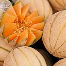 BEST PRICE 10 Seeds BELLFARM Rare Golden Honey Melon,DIY Fruit Seeds E34... - $4.99