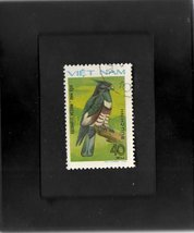 Tchotchke Framed Stamp Art - Asian Wildlife - Black Baza - $7.99