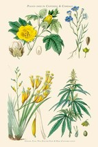 Plants used in clothing and cordage. Cotton, flax, New Zealand Flax, Cannabis by - $19.99+