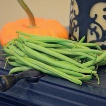 1/2 lb Seeds of Mascotte Bean - $44.85