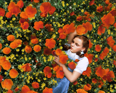 Wizard of oz dorothy asleep in poppies 24 x 36