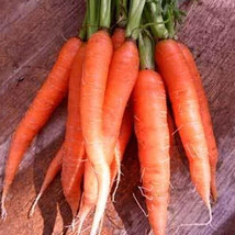 SHIP FROM US SCARLET NANTES CARROT SEEDS ~ 8 OZ SEEDS  - HEIRLOOM, NON-G... - $153.96