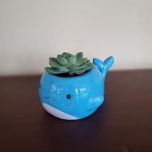 "Happy Whale Planter with Live Succulent, 6"" Blue Ceramic Animal Pot, Echeveria image 2"