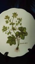 Vohenstrauss Johann Seltmann Bavaria Germany Salad Plate Alchemilla Vulg... - $9.50