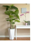 Verde & Sol Artificial Elephant Ear Alocasia Tree Plant (Planter NOT Inc... - $85.09+