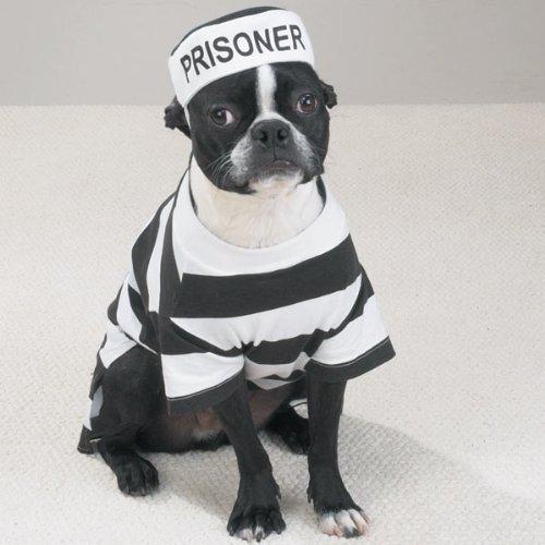 Casual Canine Prison Pooch Costume, X-Small