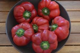 Pimienta Tomate Hungara,10 semillas,seeds,Capsicum annuum (277) - $2.22