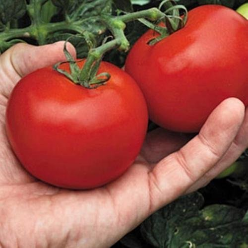 15 Seeds of Megabite Tomato