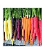 Heirloom Carrot Seeds Garden Rainbow Blend NON-GMO 5 Flavorful Varieties... - $15.95