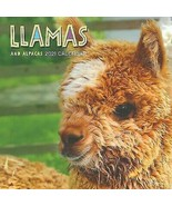 Llamas Wall Calendar 2021 w - $14.99