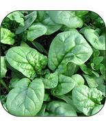 Organic Bulk Spinach Seeds (50 Lbs) - $1,087.96