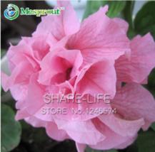 100 Pink Petunia Petals Seeds Garden Home Bonsai Flower Petunia Flower S... - $4.75