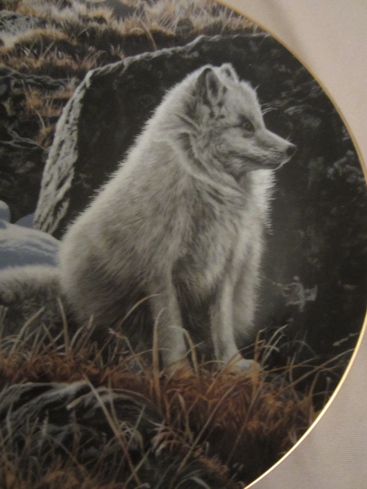ARCTIC FOX Collector Plate NORTHERN MORNING Ron Parker NATURE'S QUIET MOMENTS