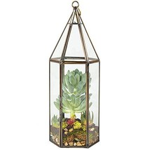 Deco Glass Hexagonal Geometric Terrarium, Succulent & Air Plant - Tall 5... - $25.83