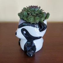 Raccoon Planter with Succulent, Live Plant Gift, Hens and Chicks, Sempervivum image 3