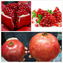 20pcs/bag Giant Pomegranate seeds home plant Delicious fruit seeds - $3.95