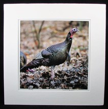 Dick Brown Graphic Photography Turkey Gobbler Signed Art Photograph Matt... - $28.36