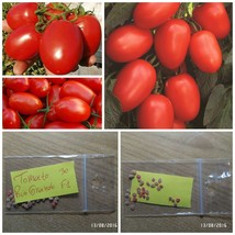 Tomato ''Rio Grande F1'' ~30 Top Quality Seeds - Very Productive - For Sauces - $13.98