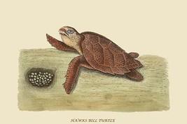 Hawks Bill Turtle by Catesby Catesby #2 - Art Print - $19.99+