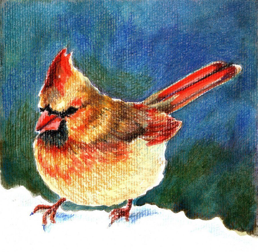 "Akimova: CARDINAL BIRD, watercolor, 6""x 6"""