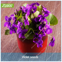 100pcs/pack Colorful Chinese Violet Flowers Bonsai Seeds Rare Fast Growing - $4.76