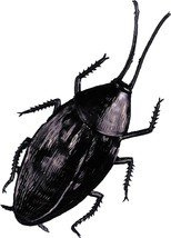 Cockroach Prop Giant Insect Rubber Haunted House Halloween Scary Creepy ... - $24.99