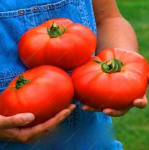 100PCS Rare Black tomato Chinese (22), HZ Healthy Vegetable Seeds - $8.89
