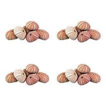 NW Wholesaler - Natural Sea Urchin Shells for Home Decor, Beach Decor, T... - $24.94