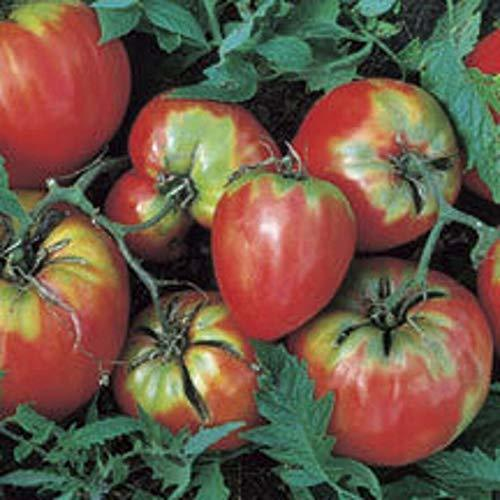 Primary image for Oxheart Tomato 400 Seeds Coeur De Boeuf, Large Vigorous, Few Seeds Tkmokey